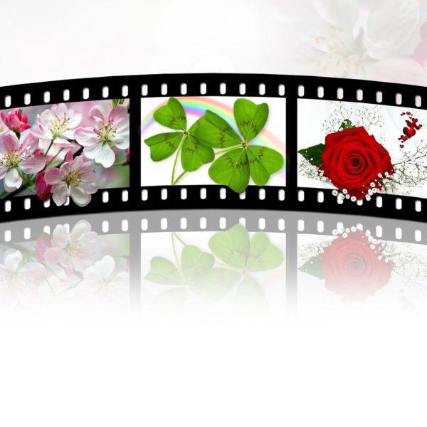 Kathy Roselli Tells Stories in Film