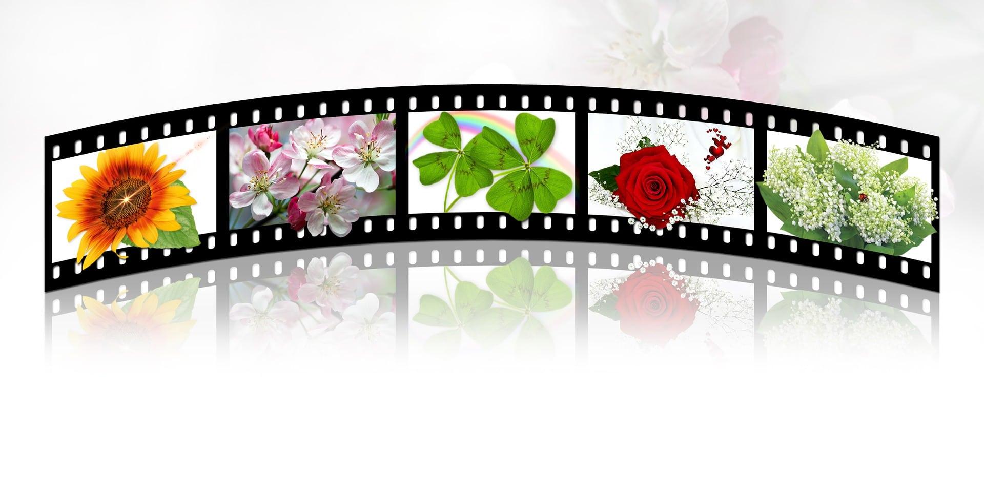 Natural Filmstrip